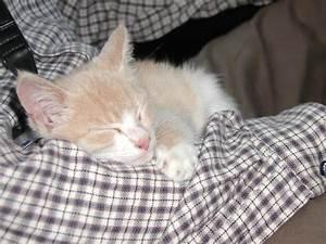 Kann Der Vermieter Katzen Verbieten : kann vermieter katze verbieten streitfall tierhaltung vermieter kann katzenhaltung nicht ~ Buech-reservation.com Haus und Dekorationen