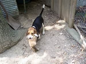 Mooreboys Beagle & Rabbit Photos