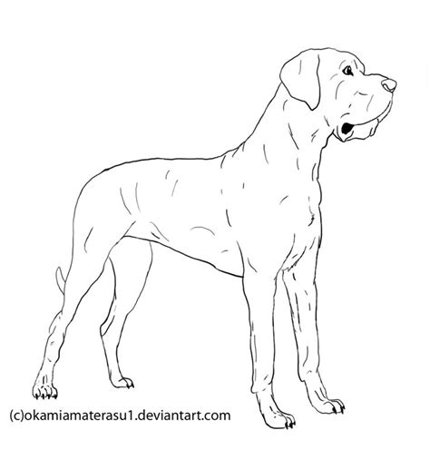 drawing  great dame dogs great dane lineart