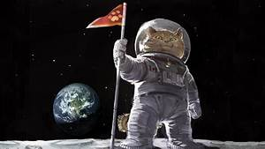 Cat astronaut on the moon wallpapers and images ...