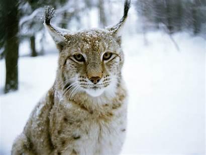 Animals Amazing Animal Desktop Animated Wallpapers Definition