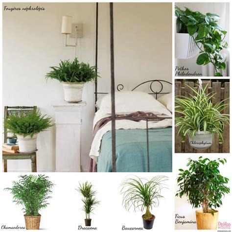plante dans une chambre quelles plantes choisir pour d 233 polluer ma maison et les