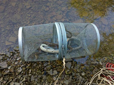 Snakes | This is my minnow trap, known as a funnel trap ...