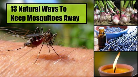 what keeps mosquitoes away 13 natural ways to keep mosquitoes away