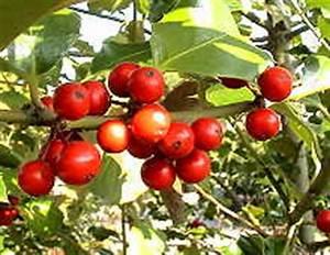 Baum Mit Roten Beeren : einheimische b ume und str ucher i ~ Markanthonyermac.com Haus und Dekorationen