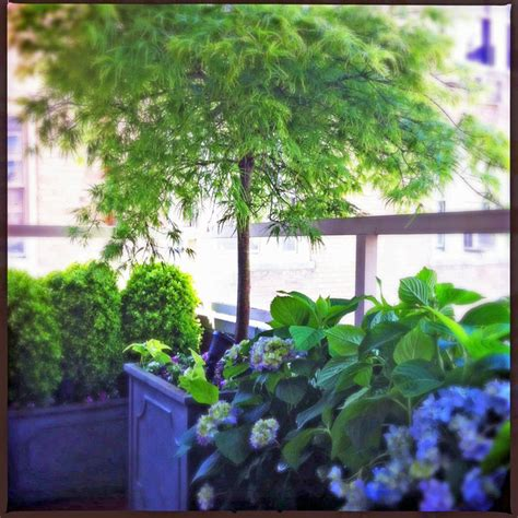 shade trees for small gardens nyc small terrace balcony roof garden container plants shade japanese maple traditional