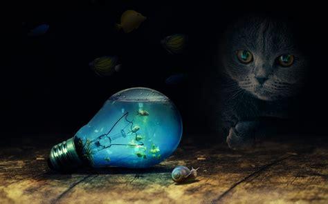 cat bulb water sea fish snail imagination photography hd