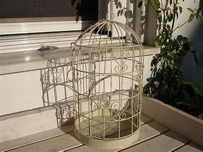 Bird Cage Wire Hanging Hinged Door Cages