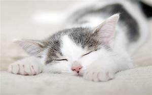可爱猫咪睡觉电脑壁纸桌面6 萌宠壁纸 下载之家