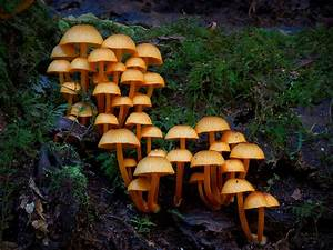 These 18 Pictures Of Unique Mushrooms Finally Proves Fungi Is An Alien