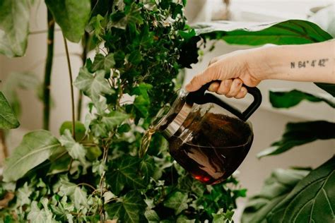 With so many types of house styles, narrowing the list down to your favorite can be help your houseplants thrive with coffee and kitchen scraps—here's how. The #1 Thing I Do With Leftover Coffee (PS: I'm Not Drinking It) | House Fur in 2020 | Natural ...