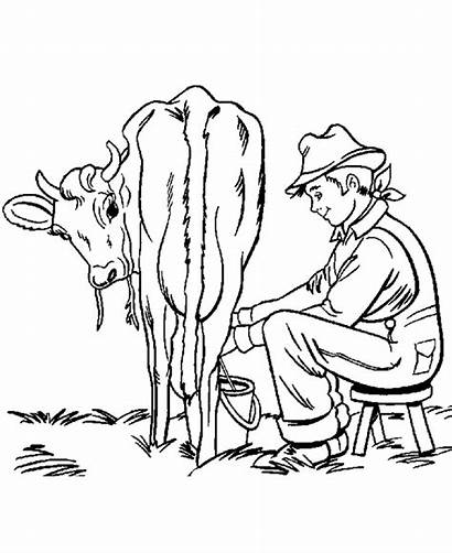 Cow Coloring Farm Pages Animals Milking Boy