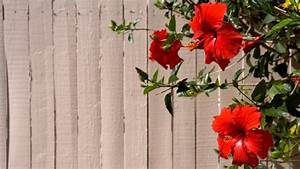 Kübelpflanzen Für Terrasse : mediterrane pflanzen f r terrasse und balkon ~ Lizthompson.info Haus und Dekorationen
