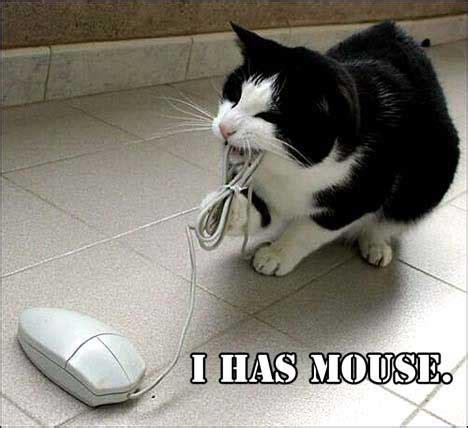 Mouse Memes - internet memes memesgroupproject