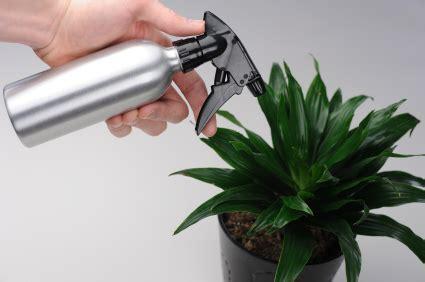 entretenir un azalee d interieur entretien des plantes d int 233 rieur le journal du jardin