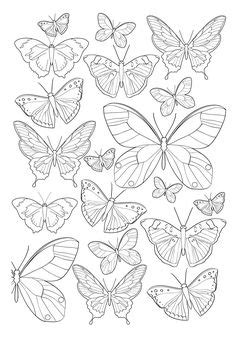 1860 Antique Ulysses butterfly print vintage by