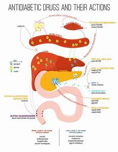 Antidiabetic Drug Infographic  Pharmacology Study Guide