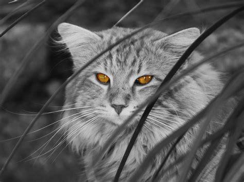 Furtive Feline II Photograph by Richard Stephen