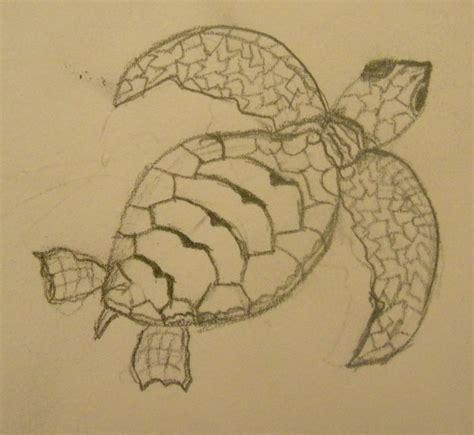 Loggerhead Sea Turtle Drawing