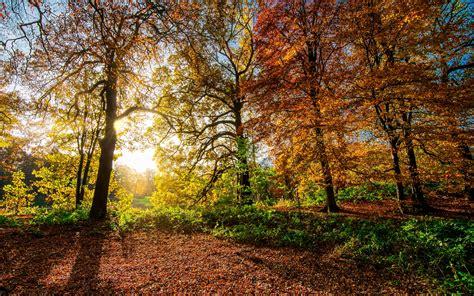 imagen gratis arbol amanecer naturaleza madera