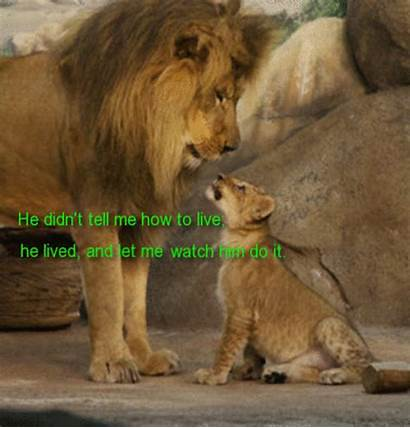 Lion Son King Dad Father Quotes Wishes