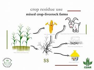 Crop residue use in crop-livestock farms: Challenges and ...