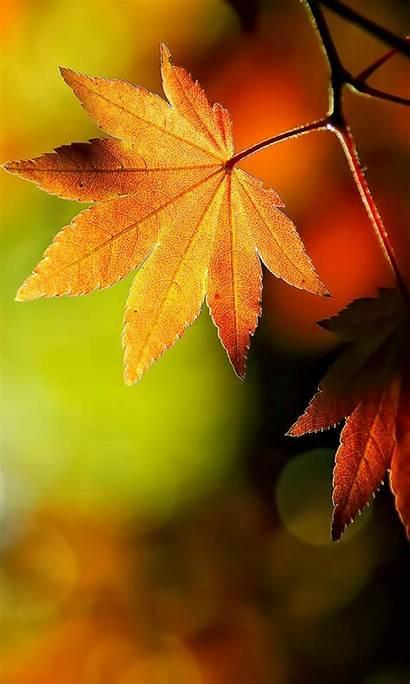 Autumn Phone Leaves Mobile Lumia Nokia Wallpapers