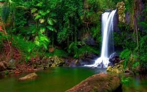 Wonderful Tropical Waterfall Jungle Green Tropical