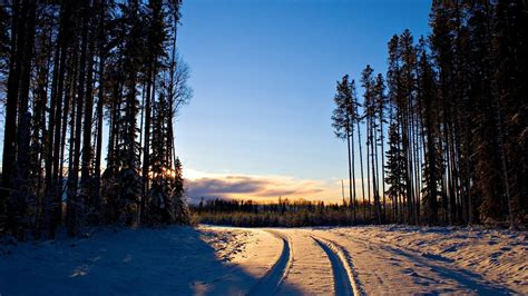 sunset forest winter snow wallpapers hd desktop