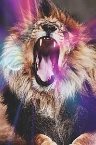 Lion | via Tumblr - image #921365 by mollyroop on Favim.com