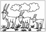 Goats Billy Gruff Goat Coloring Three Pages Colouring Clipart Colour Clip Sheep Worksheets Template Many Cliparts Farm Library Getcoloringpages Results sketch template