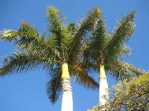 überwintern Von Palmen : gran canaria berwintern unter palmen sonne im winter ~ Michelbontemps.com Haus und Dekorationen