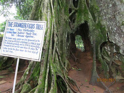 aburi botanical gardens maureen s leave for change