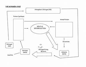 Blank Carbon Cycle Diagram Printable  U2013 Jowo