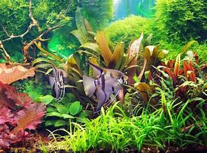 Aquarium Einrichten Beispiele : aquarium einrichten tipps f r den aquaristik neuling zooroyal magazin ~ Frokenaadalensverden.com Haus und Dekorationen