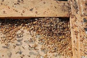 Was hilft gegen ameisen auf der terrasse was hilft gegen for Ameisen auf der terrasse