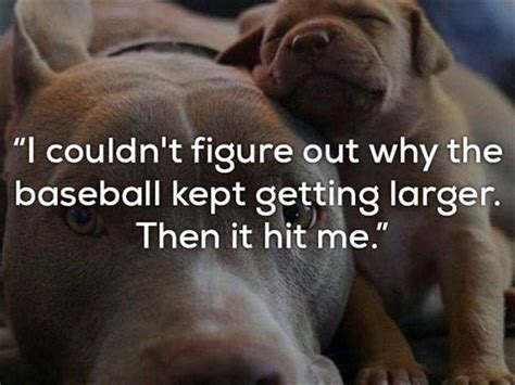 Really Bad One Liner Jokes Are Funnier With Dogs 24 Pics