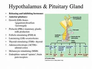 Ppt - Endocrine  Regulatory  System Powerpoint Presentation
