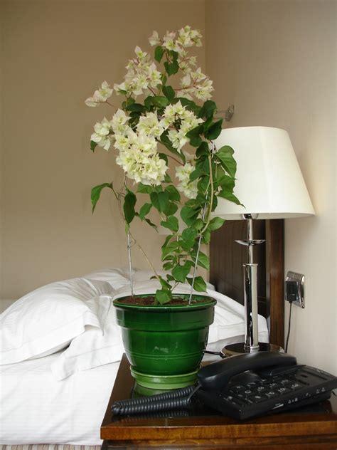 a fleur de pot rennes contenants pour plantes les fournisseurs grossistes et fabricants sur hellopro