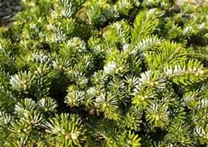 Winterharte Pflanzen Für Balkonkästen : balkonbepflanzung ganzj hrig winterharte dauerbepflanzung balkon ~ Orissabook.com Haus und Dekorationen