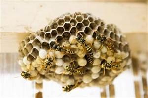 Wespen Unterm Dach Kein Direkter Zugriff Möglich : wespennest entfernen wie es geht und was nicht geht ~ Whattoseeinmadrid.com Haus und Dekorationen