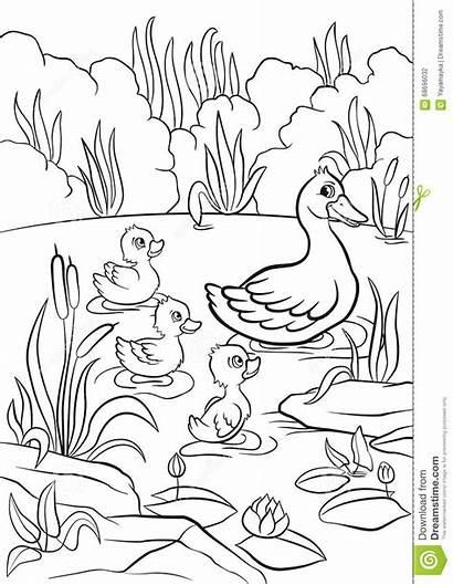 Duck Lake Ducklings Swim Kind Grass Coloring
