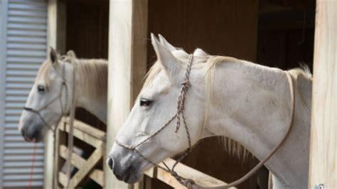 Kriebelmücken Pferd Was Hilft