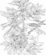 Paradise Bird Flower Drawing Coloring Pages Tropical Beach Getdrawings sketch template