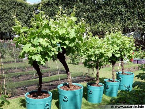 cuisiner les ceps cultiver la vigne en pot