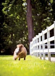 Download 2015 Calendar Meet Thumbelina The World 39 S Smallest Horse