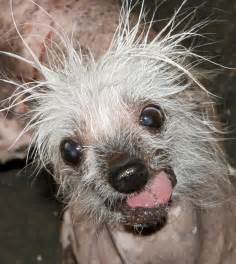 10 ugly dog breeds you need to see to believe pets world