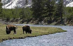 Yellowstone National Park - oldest national park in the world