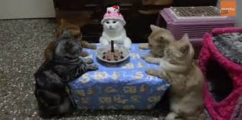 kitty cat birthday human throws cat a snazzy birthday bash feline is not