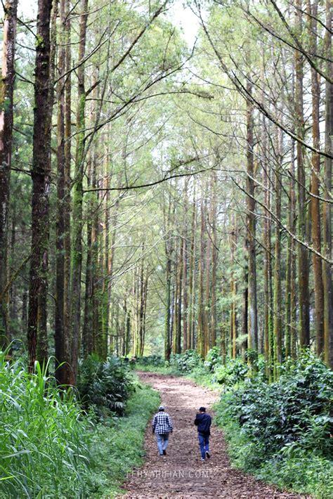 view keren hutan pinus budug asu fery arifian